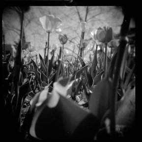 flowers film
